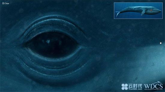 在线观看震撼的深海蓝鲸,世界上最大的动物!