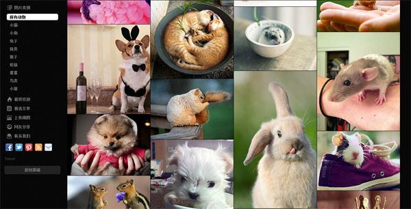 超萌动物图片分享网站:Cutest Paw