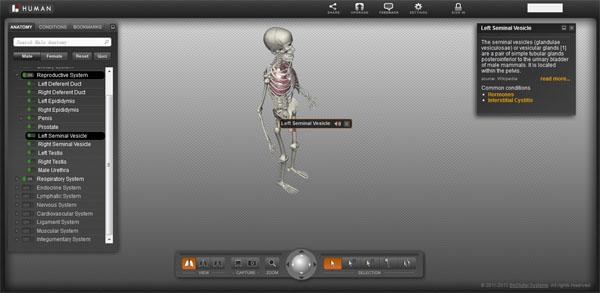 BioDigita Human- 在线3D人体结构模型【云软件】